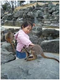 動物紹介|ひびき動物ワールド